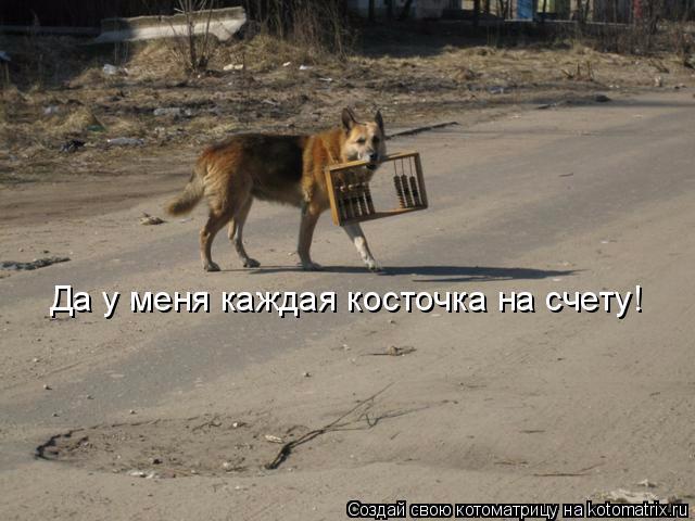 kotomatritsa_l (640x480, 217Kb)