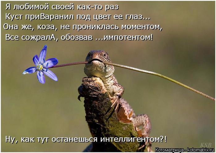 kotomatritsa_r (700x494, 302Kb)