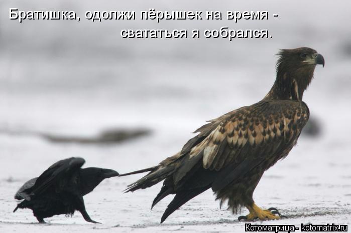 kotomatritsa_X (699x465, 148Kb)