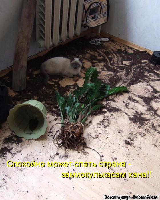 kotomatritsa_Y4 (560x700, 416Kb)