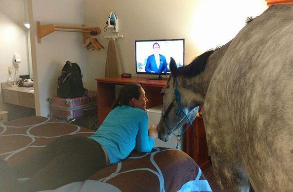 В США девушка заселилась в мотель со своей лошадью