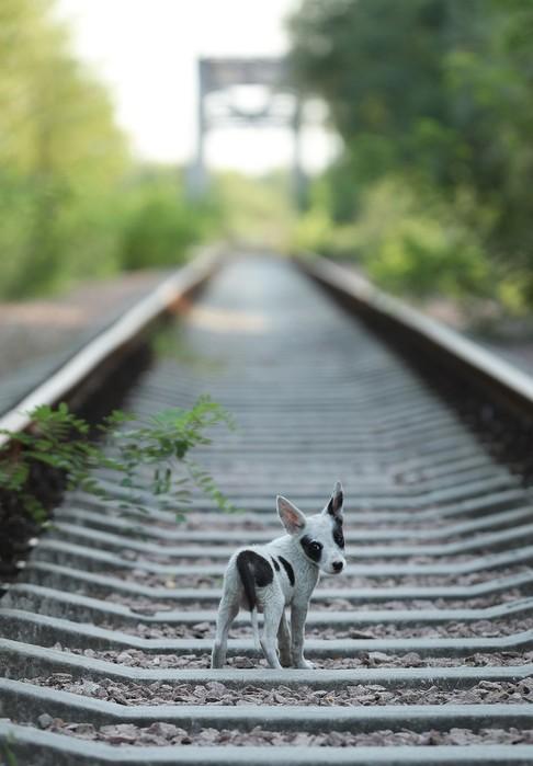 Программа «Собаки Чернобыля»   работа ветеринаров и экспертов по радиации в зоне отчуждения