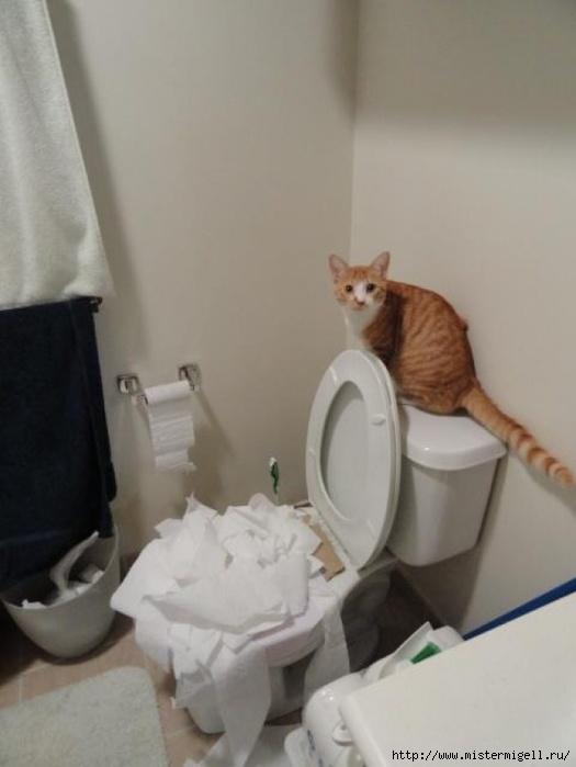 во всем виноват кот