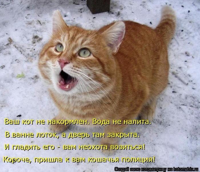 kotomatritsa_c (700x602, 449Kb)