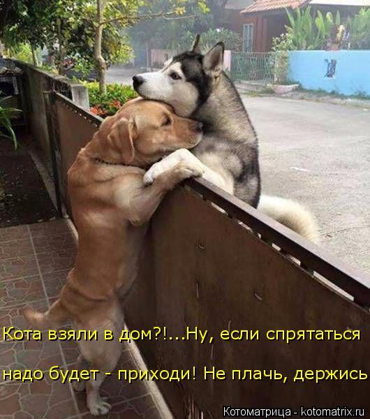 kotomatritsa_pT (530x600, 261Kb)