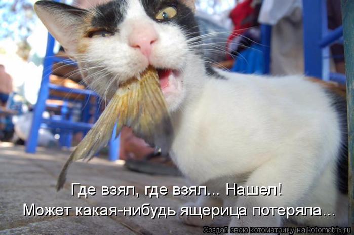 kotomatritsa_Yz (700x464, 300Kb)