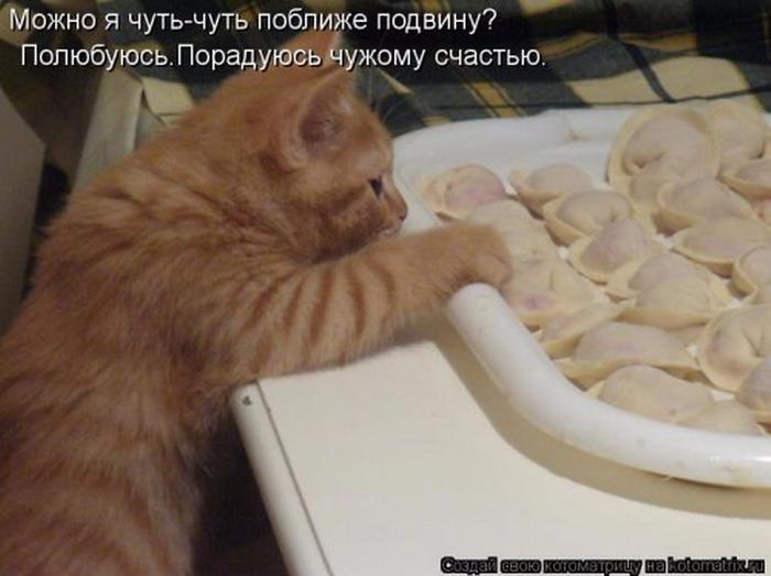 1360508303_1360269340_novye-kotomatricy-6_resize (700x523, 299Kb)