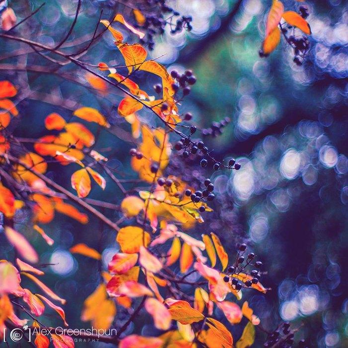магия-осени-в-фотографиях-алекса-гришпуна-18 (700x700, 121Kb)