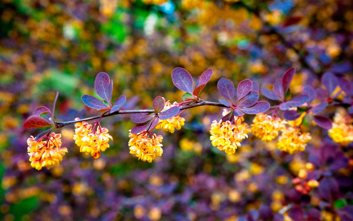 9246blossom-branch-leaves-nature-2880x1800 (700x437, 383Kb)