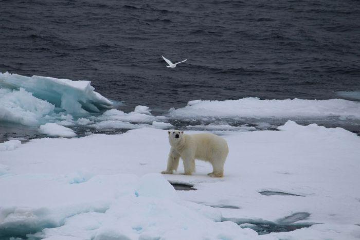ecoset_Arctica (700x467, 37Kb)