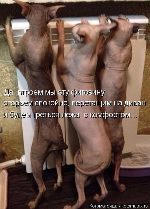kotomatritsa_- (503x700, 322Kb)