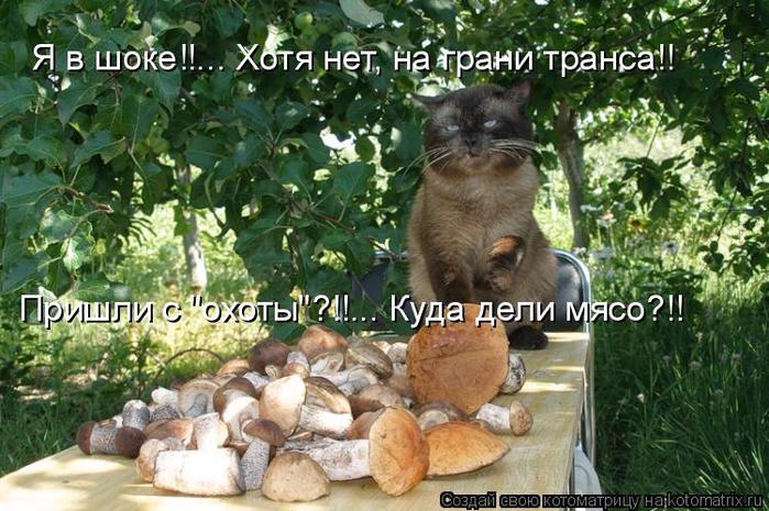 kotomatritsa_5 (700x465, 428Kb)