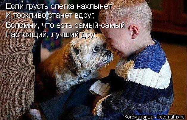 kotomatritsa_An (628x405, 282Kb)