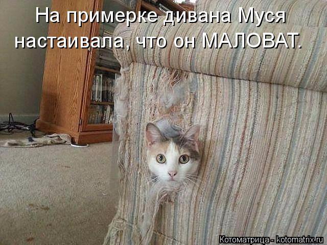 kotomatritsa_B (640x480, 229Kb)