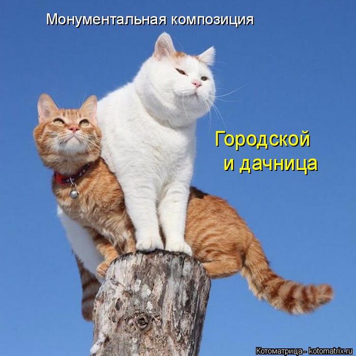 kotomatritsa_D (1) (700x700, 348Kb)
