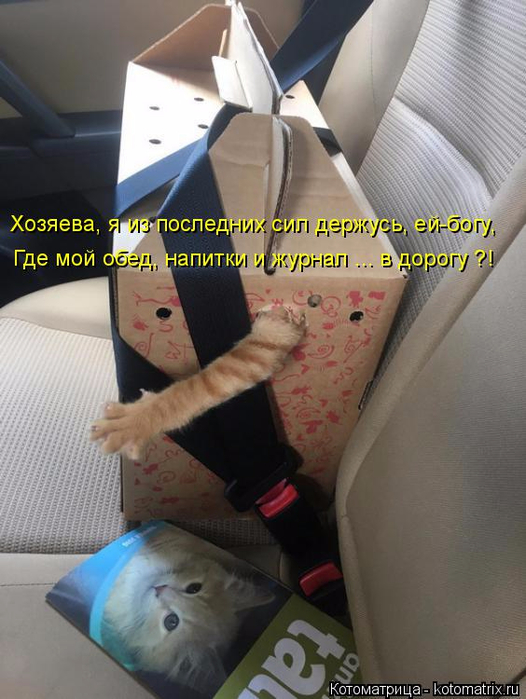 kotomatritsa_d (3) (526x700, 325Kb)