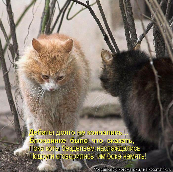 kotomatritsa_I (3) (700x696, 386Kb)