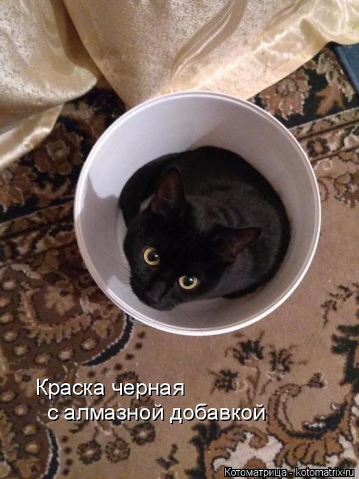 kotomatritsa_jl (524x700, 347Kb)
