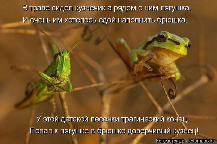 kotomatritsa_K (700x466, 315Kb)