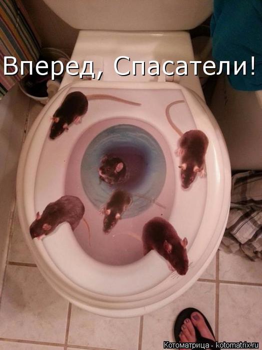 kotomatritsa_sf (524x700, 289Kb)
