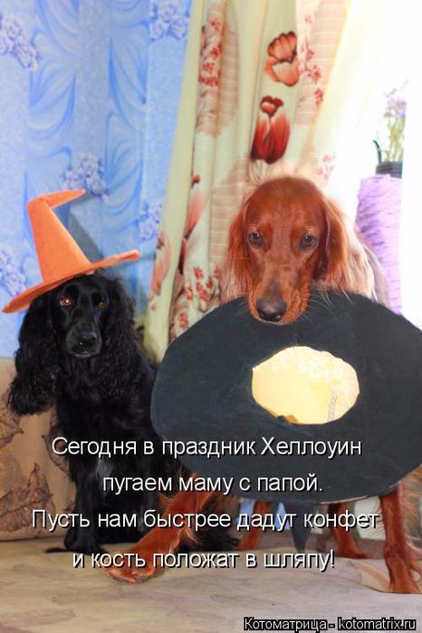 kotomatritsa_V (2) (466x700, 320Kb)