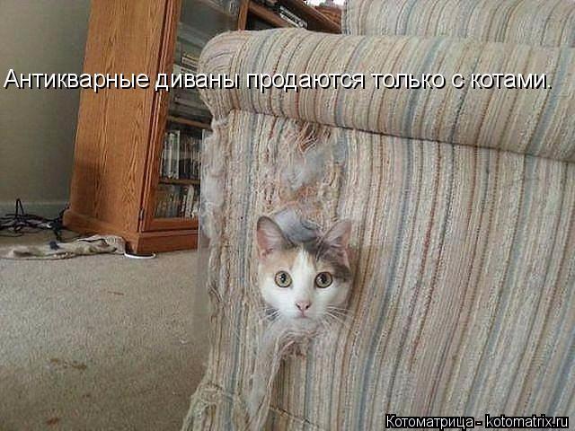 kotomatritsa_vJ (640x480, 217Kb)