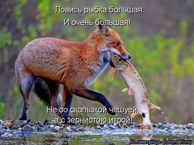 kotomatritsa_w (1) (640x480, 321Kb)