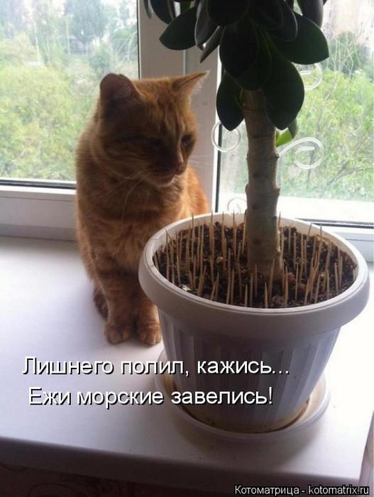 kotomatritsa_x (527x700, 308Kb)