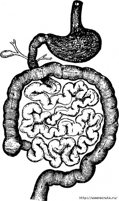 mikroflora kishechnika(414x700, 235Kb)
