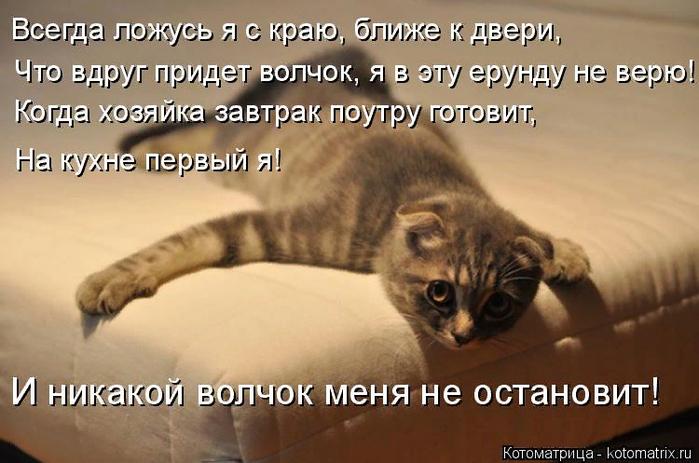kotomatritsa_eA (700x463, 366Kb)