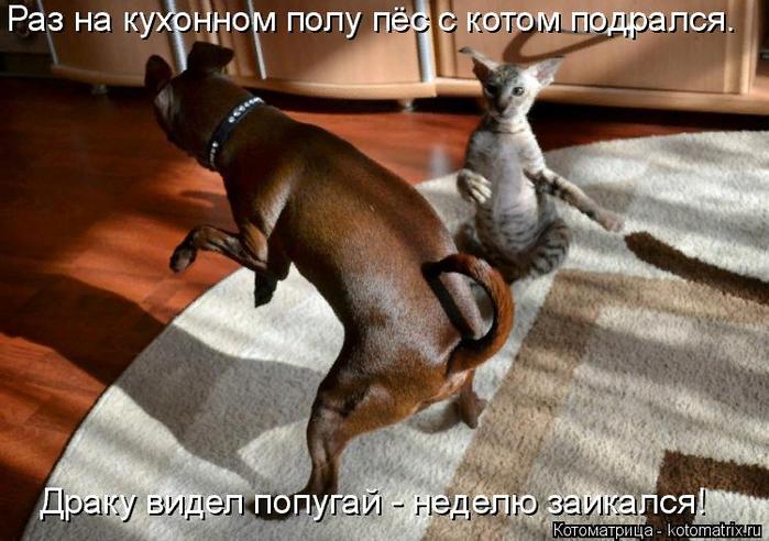 kotomatritsa_O (1) (700x492, 440Kb)