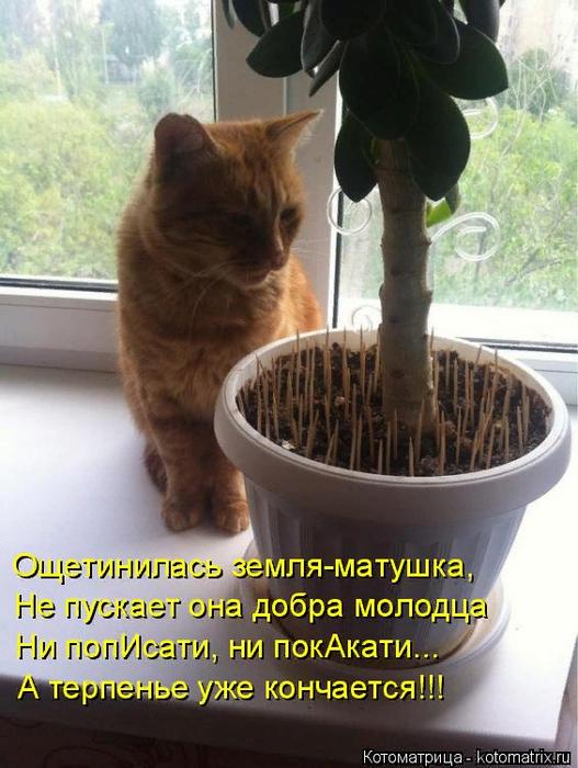 kotomatritsa_O (527x700, 451Kb)