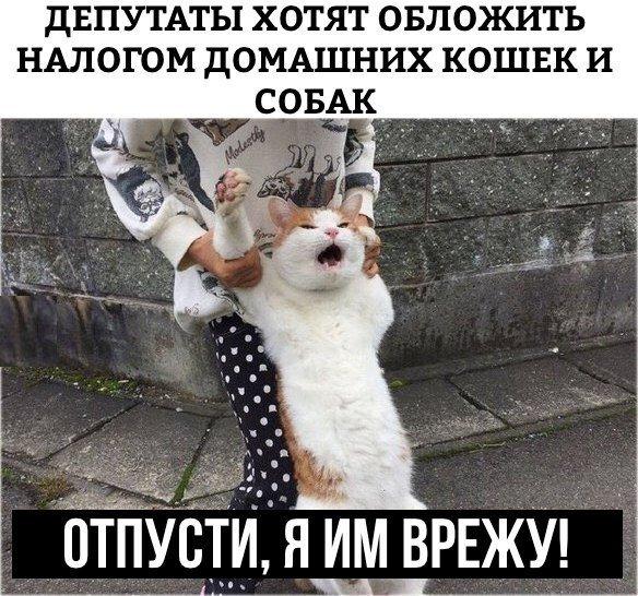 кот (584x546, 102Kb)
