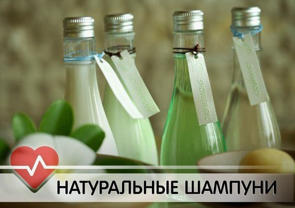 3256587_Domashnie_shampyni (604x426, 44Kb)