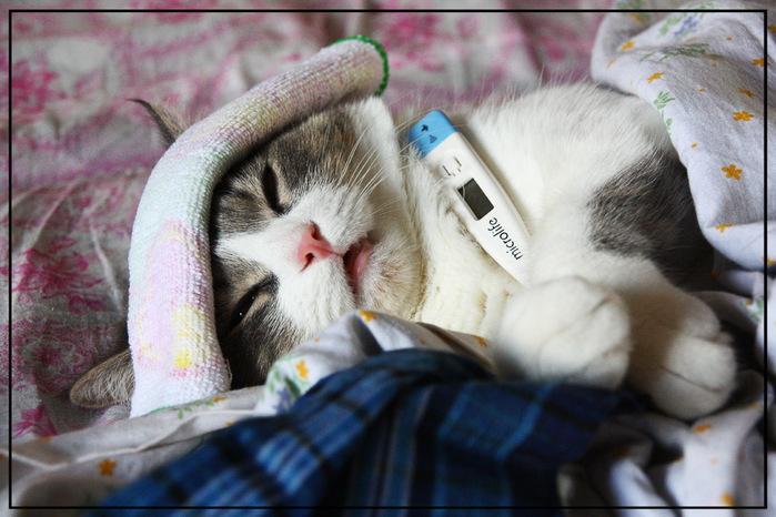 657352_cats (700x466, 131Kb)