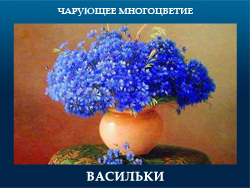 5107871_VASILKI (250x188, 88Kb)