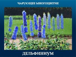 5107871_DELFINIYM (250x188, 99Kb)