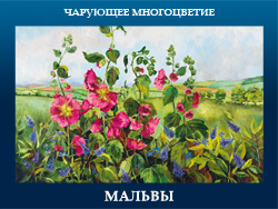 5107871_MALVI (250x188, 102Kb)