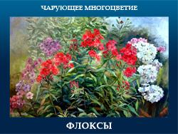 5107871_FLOKSI (250x188, 104Kb)