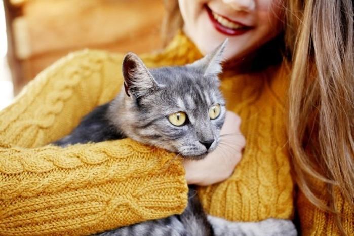 Что нужно делать, когда кошка загуляла