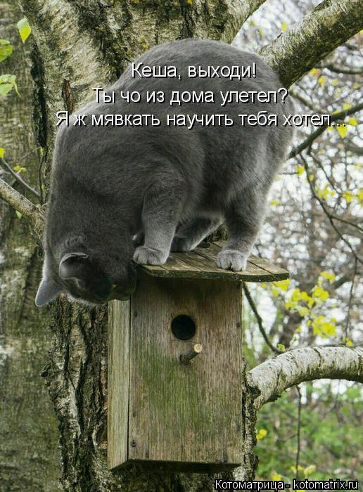 kotomatritsa_xA (516x700, 486Kb)
