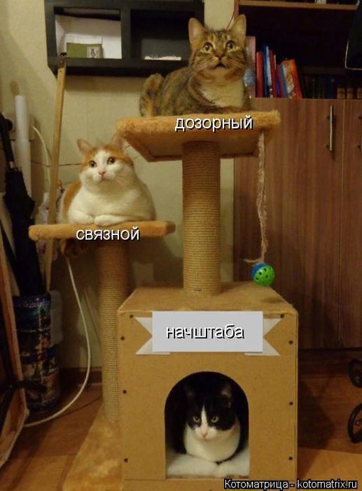 kotomatritsa_Z (517x700, 403Kb)