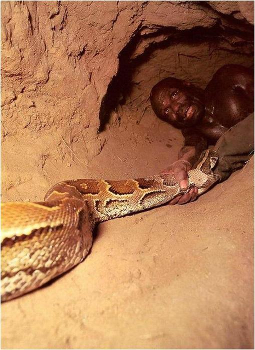 138345544 111617 0833 2 Как ловят питонов? Фотографии охоты на змей в Африке