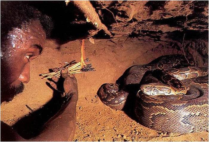 138345548 111617 0833 6 Как ловят питонов? Фотографии охоты на змей в Африке