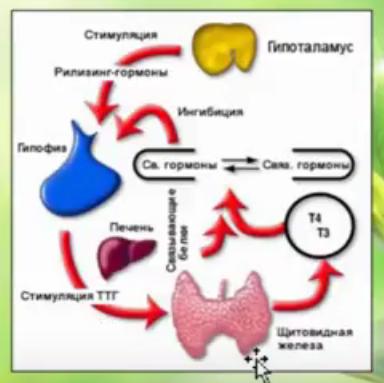 Йод необходим для синтеза гормонов щитовидной железы