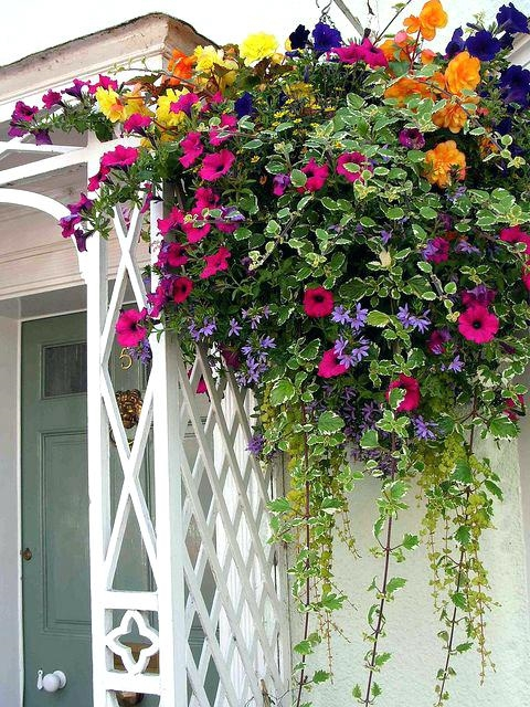best-plants-for-hanging-baskets-australia-perennial-flowers-for-hanging-pots-gorgeous-hanging-basket-of-flowers-these-colors-this-year-best-annual-flowers-for-hanging-baskets (480x640, 425Kb)