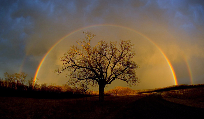 rainbow_elam_3-700 (700x408, 285Kb)