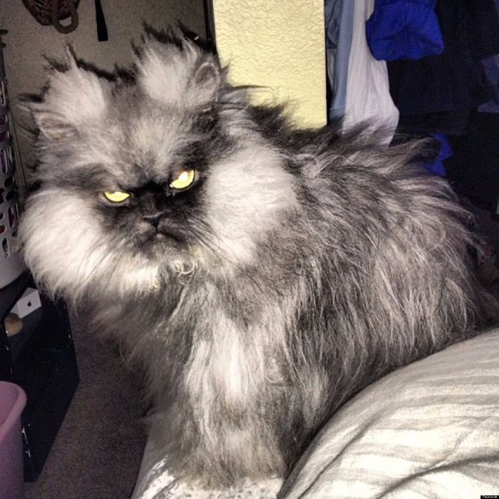 o-ANGRIEST-CAT-COLONEL-MEOW-facebook (700x700, 459Kb)