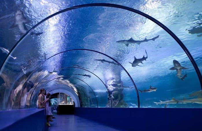 аквариум в анталии 1 (700x453, 357Kb)