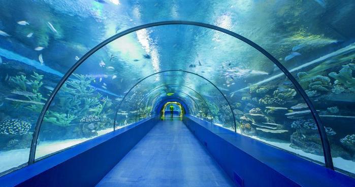 аквариум в анталии 5 (700x369, 306Kb)